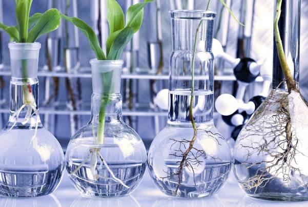 تایید سلامت محصولات تراریخته توسط 200 مرکز معتبر علمی