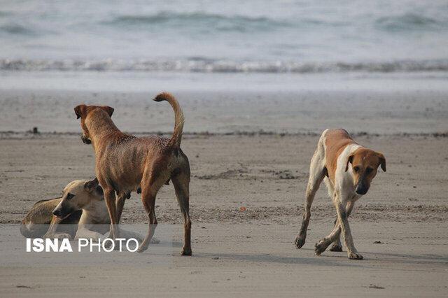 سگ های بلاصاحب با جامعه چه می کنند؟