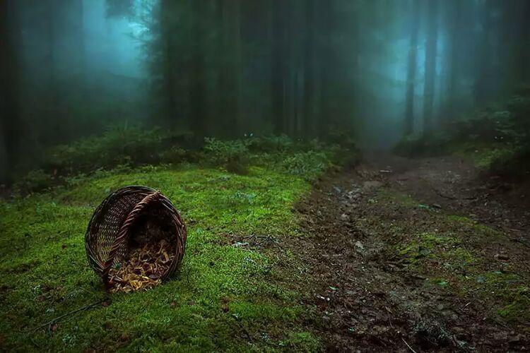 15 جنگل مرموز و شگفت انگیز دنیا