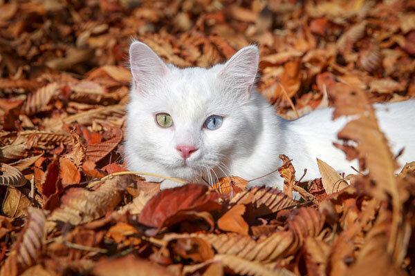 عکس روز: برنده مسابقه گربه های خشنود