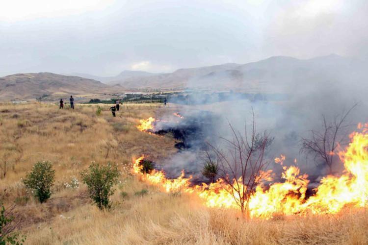 حکم قضایی و مجازات آتش زدن جنگل ها و بوستان ها چیست؟