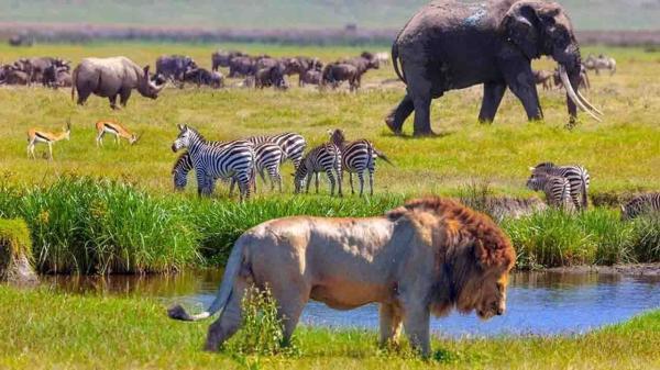 همه چیز هایی که باید درباره تنوع زیستی بدانید