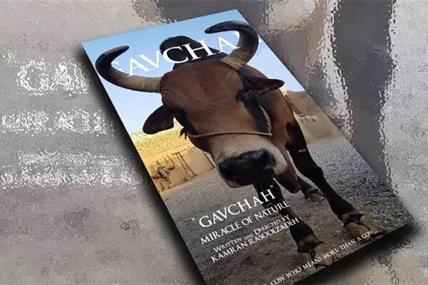 راه یابی مستند گاوچاه به جشنواره پاییز در وورونت رومانی